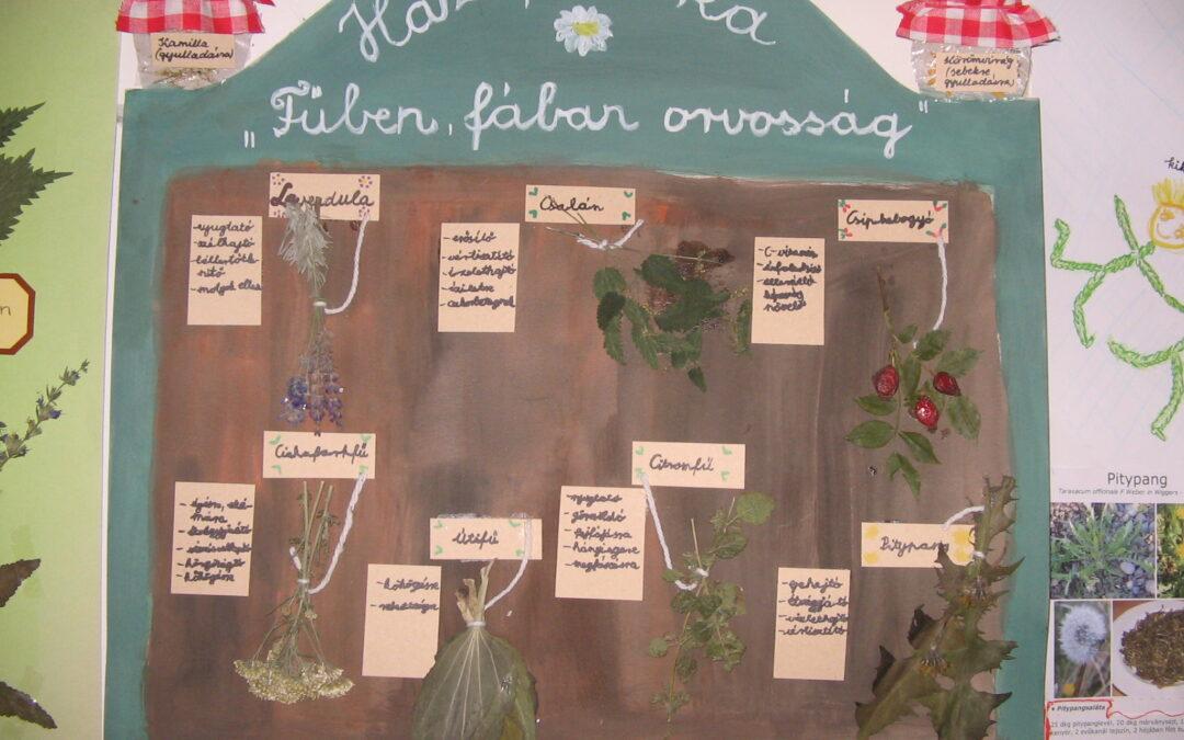 Fűben, fában orvosság – 2009-2010